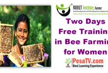 Photo of Two Days Free Training in Bee Farming for Women